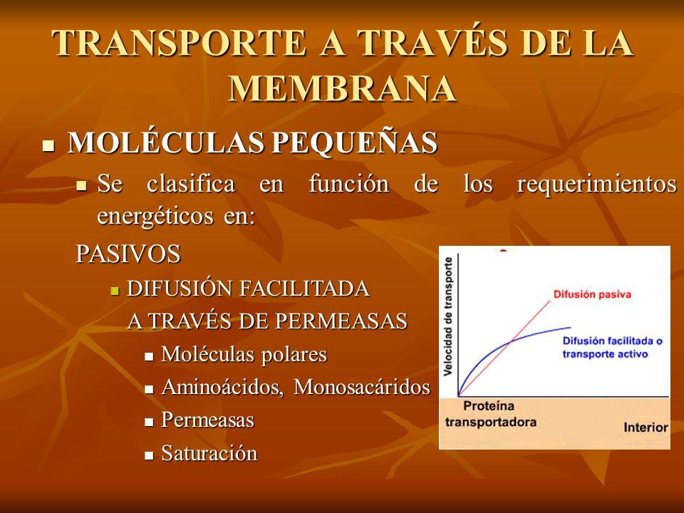 MOLÉCULAS PEQUEÑAS MOLÉCULAS PEQUEÑAS Se clasifica en función de los requerimientos energéticos en: Se clasifica en función de los requerimientos ener