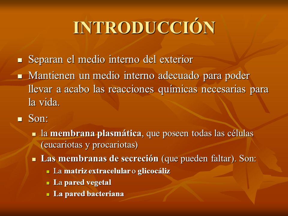 INTRODUCCIÓN Separan el medio interno del exterior Separan el medio interno del exterior Mantienen un medio interno adecuado para poder llevar a acabo