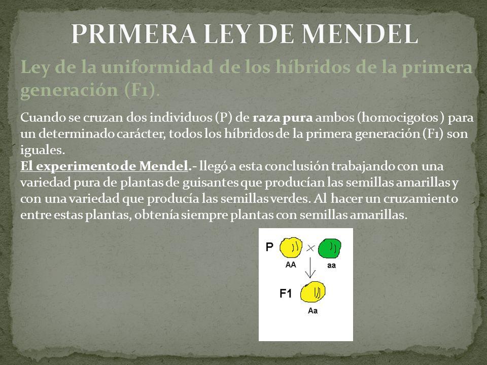 Ley de la uniformidad de los híbridos de la primera generación (F1). Cuando se cruzan dos individuos (P) de raza pura ambos (homocigotos ) para un det