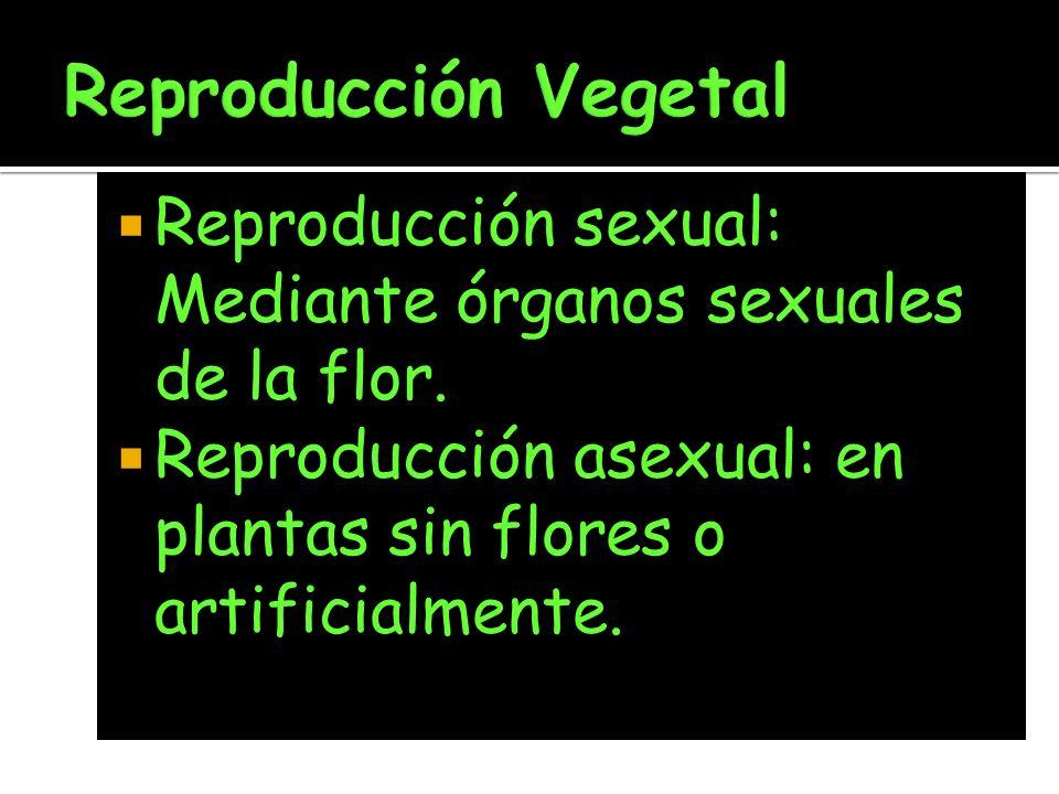Reproducción sexual: Mediante órganos sexuales de la flor. Reproducción asexual: en plantas sin flores o artificialmente.