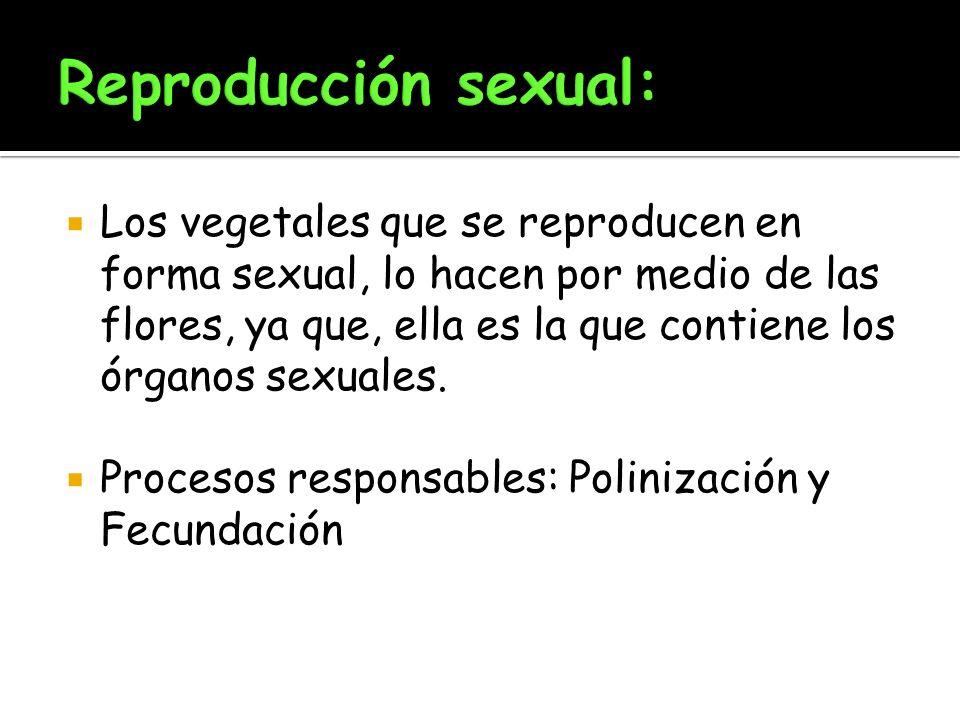 Los vegetales que se reproducen en forma sexual, lo hacen por medio de las flores, ya que, ella es la que contiene los órganos sexuales. Procesos resp