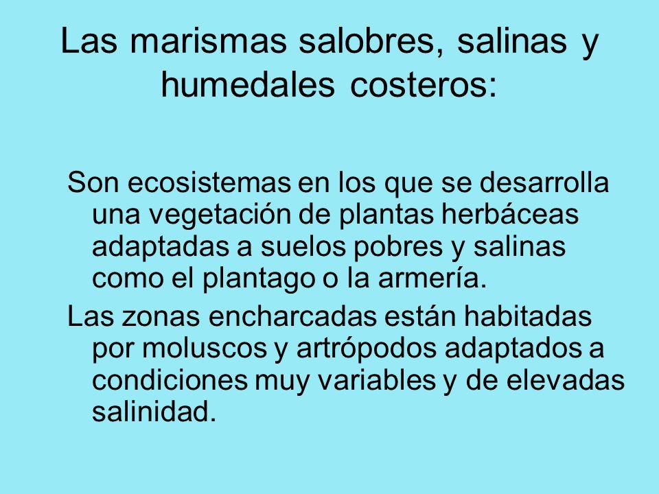 Las marismas salobres, salinas y humedales costeros: Son ecosistemas en los que se desarrolla una vegetación de plantas herbáceas adaptadas a suelos p