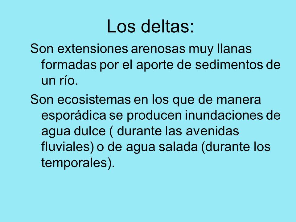 Los deltas: Son extensiones arenosas muy llanas formadas por el aporte de sedimentos de un río. Son ecosistemas en los que de manera esporádica se pro