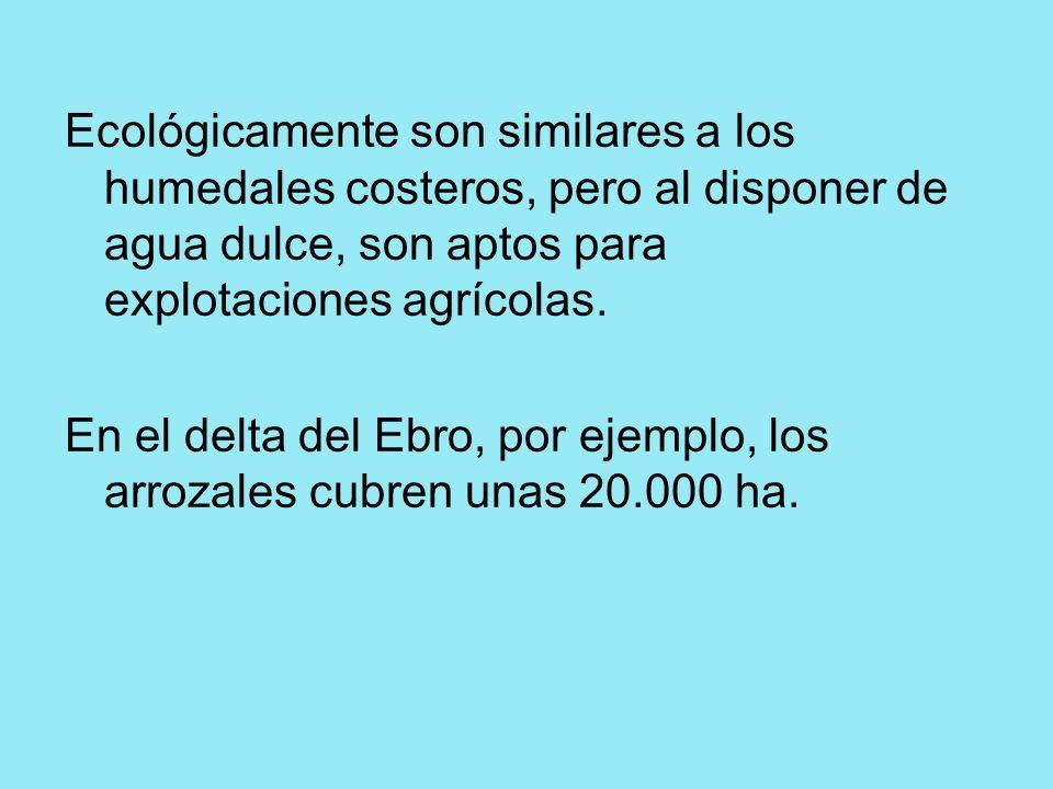 Ecológicamente son similares a los humedales costeros, pero al disponer de agua dulce, son aptos para explotaciones agrícolas. En el delta del Ebro, p