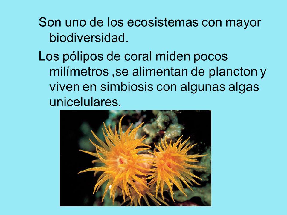 Son uno de los ecosistemas con mayor biodiversidad. Los pólipos de coral miden pocos milímetros,se alimentan de plancton y viven en simbiosis con algu