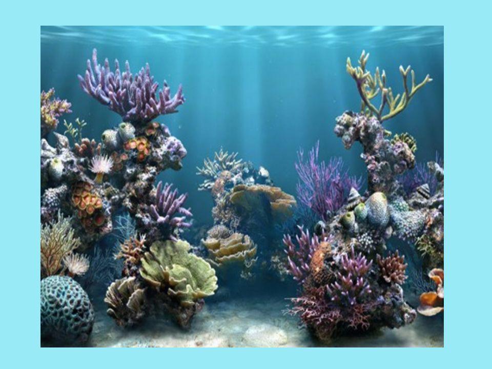 Las marismas salobres, salinas y humedales costeros: Son ecosistemas en los que se desarrolla una vegetación de plantas herbáceas adaptadas a suelos pobres y salinas como el plantago o la armería.