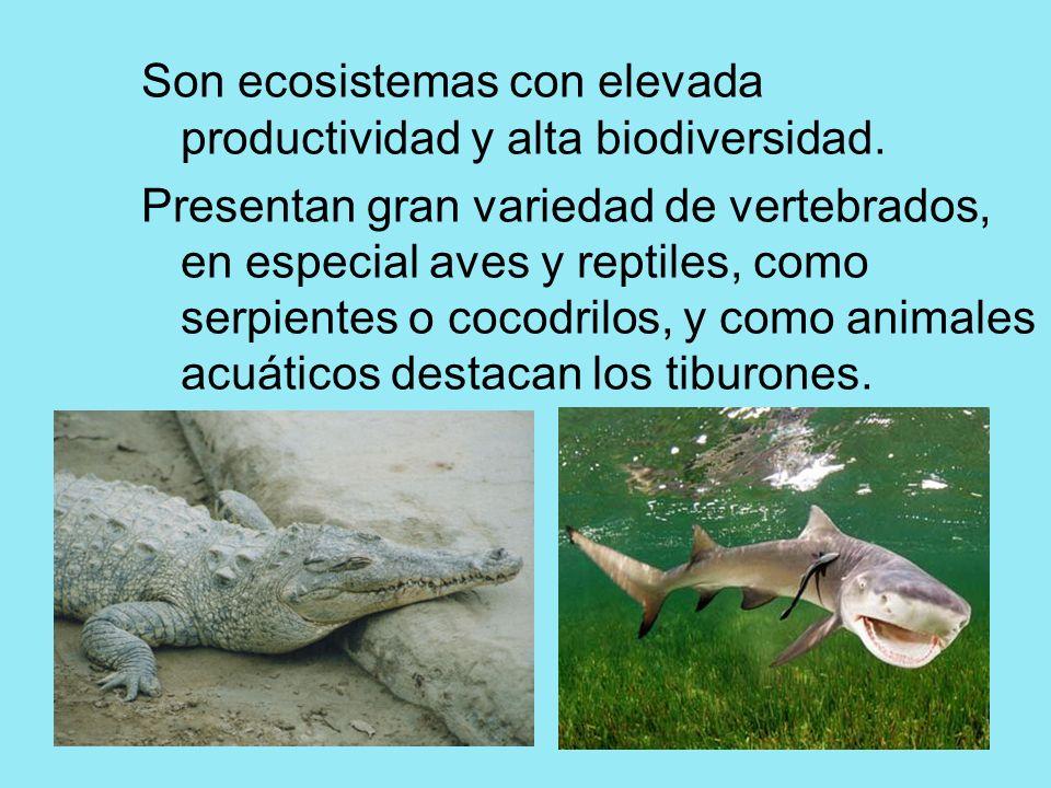Son ecosistemas con elevada productividad y alta biodiversidad. Presentan gran variedad de vertebrados, en especial aves y reptiles, como serpientes o