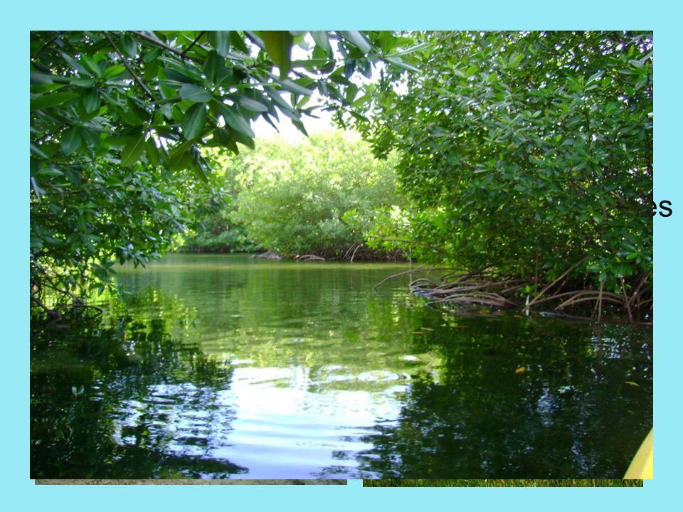 Los deltas: Son extensiones arenosas muy llanas formadas por el aporte de sedimentos de un río.