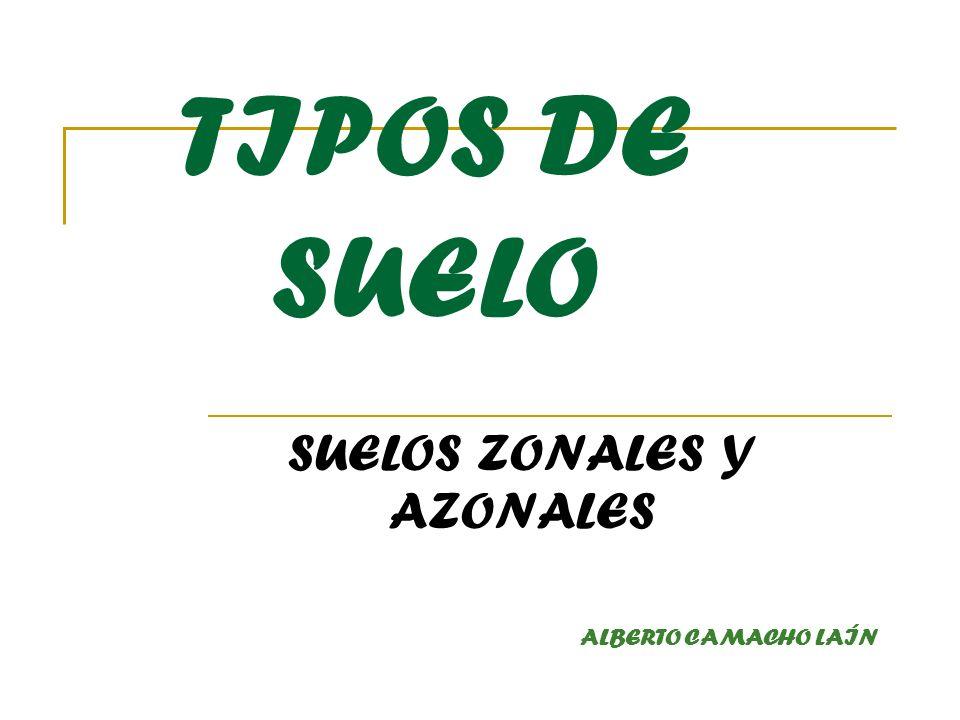 TIPOS DE SUELO SUELOS ZONALES Y AZONALES ALBERTO CAMACHO LAÍN