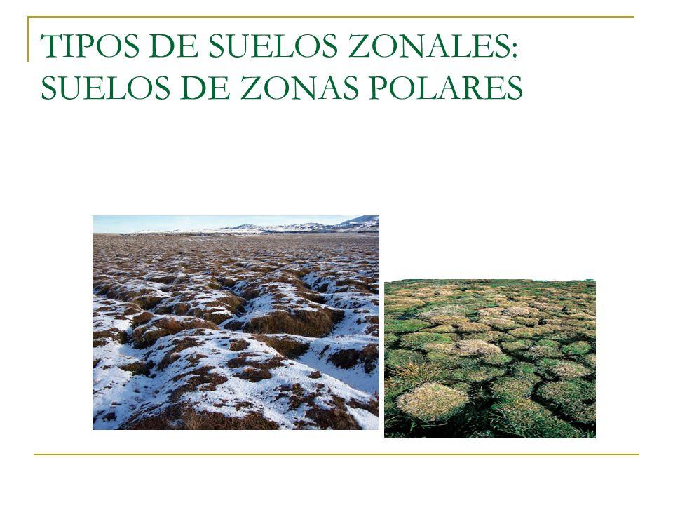 TIPOS DE SUELOS ZONALES: SUELOS DE ZONAS POLARES
