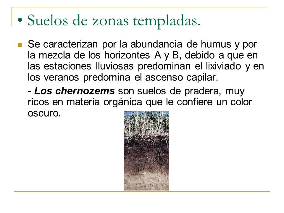 Suelos de zonas templadas. Se caracterizan por la abundancia de humus y por la mezcla de los horizontes A y B, debido a que en las estaciones lluviosa