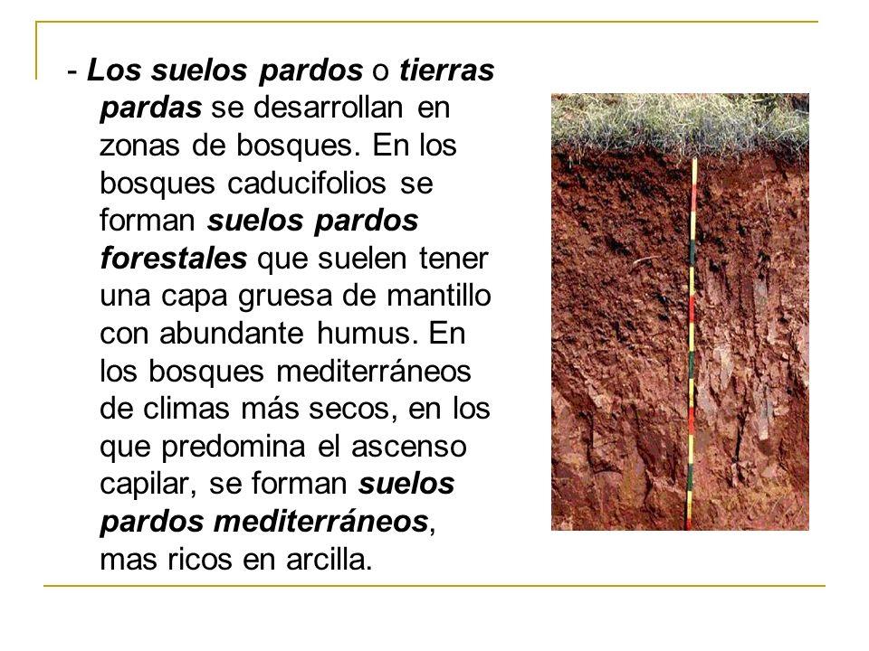 - Los suelos pardos o tierras pardas se desarrollan en zonas de bosques. En los bosques caducifolios se forman suelos pardos forestales que suelen ten