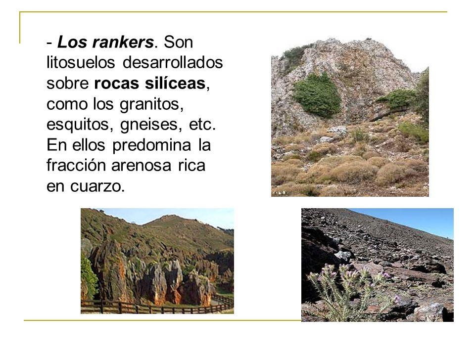 - Los rankers. Son litosuelos desarrollados sobre rocas silíceas, como los granitos, esquitos, gneises, etc. En ellos predomina la fracción arenosa ri
