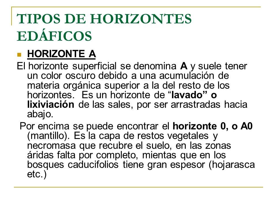 TIPOS DE HORIZONTES EDÁFICOS HORIZONTE A El horizonte superficial se denomina A y suele tener un color oscuro debido a una acumulación de materia orgá