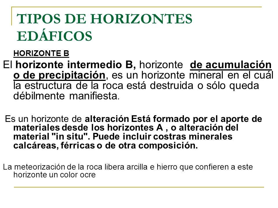 TIPOS DE HORIZONTES EDÁFICOS HORIZONTE B El horizonte intermedio B, horizonte de acumulación o de precipitación, es un horizonte mineral en el cuál la