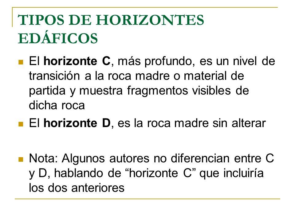 TIPOS DE HORIZONTES EDÁFICOS El horizonte C, más profundo, es un nivel de transición a la roca madre o material de partida y muestra fragmentos visibl