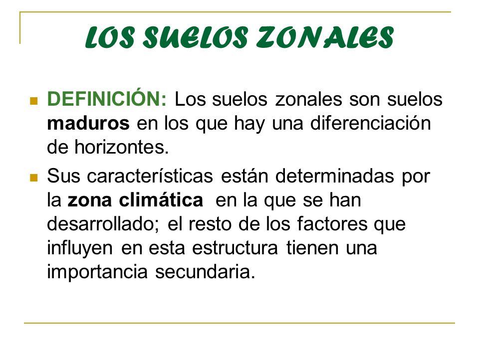 LOS SUELOS ZONALES DEFINICIÓN: Los suelos zonales son suelos maduros en los que hay una diferenciación de horizontes. Sus características están determ