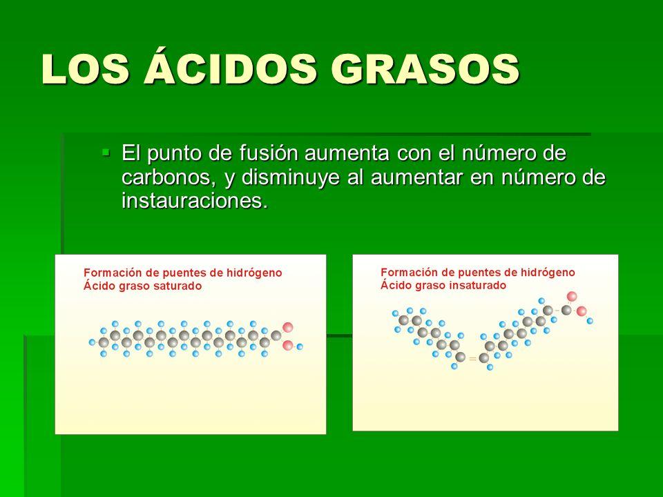 LOS ÁCIDOS GRASOS El punto de fusión aumenta con el número de carbonos, y disminuye al aumentar en número de instauraciones. El punto de fusión aument