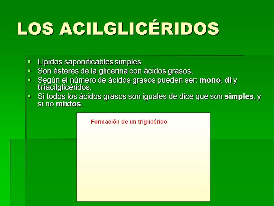LOS ACILGLICÉRIDOS Lípidos saponificables simples Son ésteres de la glicerina con ácidos grasos. Según el número de ácidos grasos pueden ser: mono, di