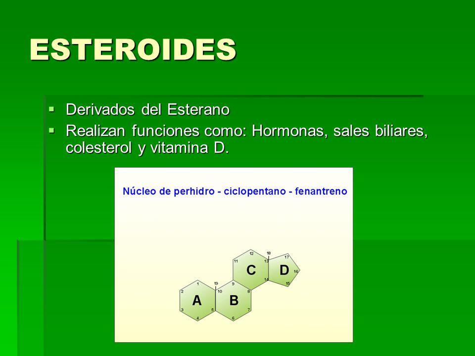 ESTEROIDES Derivados del Esterano Derivados del Esterano Realizan funciones como: Hormonas, sales biliares, colesterol y vitamina D. Realizan funcione
