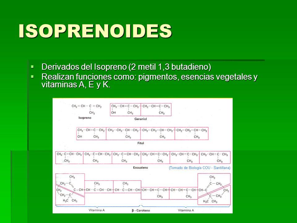 ISOPRENOIDES Derivados del Isopreno (2 metil 1,3 butadieno) Derivados del Isopreno (2 metil 1,3 butadieno) Realizan funciones como: pigmentos, esencia