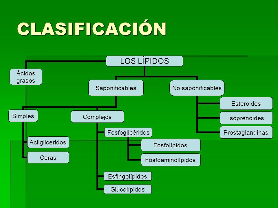 CLASIFICACIÓN LOS LÍPIDOS Ácidos grasosSaponificables Simples Acilglicéridos Ceras Complejos Fosfoglicéridos Fosfolípidos Fosfoaminolípidos Esfingolíp