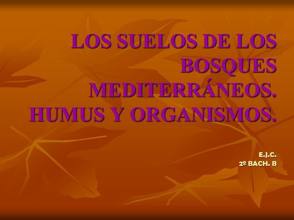 LOS SUELOS DE LOS BOSQUES MEDITERRÁNEOS. HUMUS Y ORGANISMOS. E.J.C. 2º BACH. B