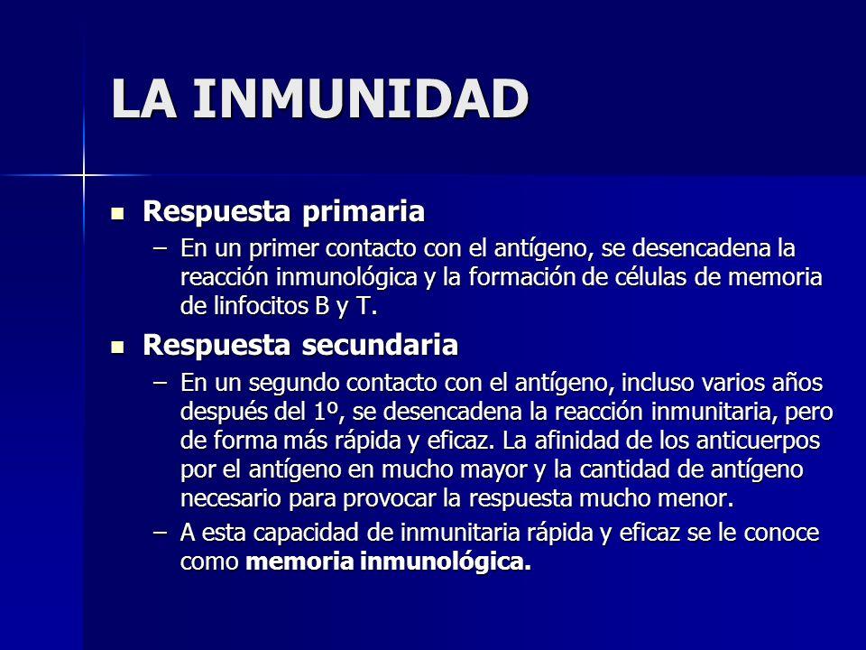 LA INMUNIDAD Respuesta primaria Respuesta primaria –En un primer contacto con el antígeno, se desencadena la reacción inmunológica y la formación de c