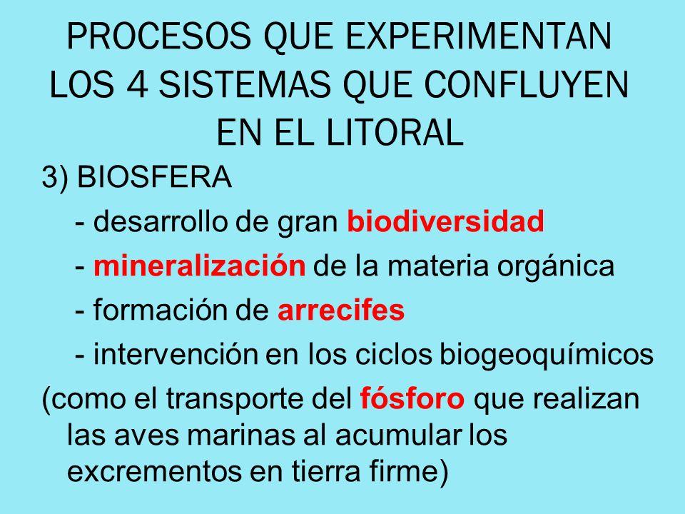 PROCESOS QUE EXPERIMENTAN LOS 4 SISTEMAS QUE CONFLUYEN EN EL LITORAL 3) BIOSFERA - desarrollo de gran biodiversidad - mineralización de la materia org