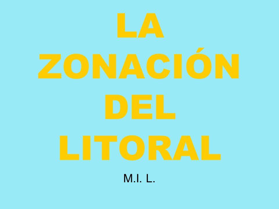 LA ZONACIÓN DEL LITORAL M.I. L.