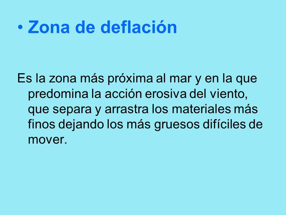 Zona de deflación Es la zona más próxima al mar y en la que predomina la acción erosiva del viento, que separa y arrastra los materiales más finos dej