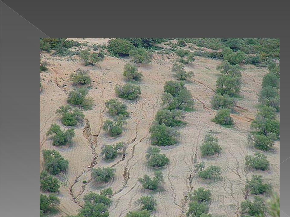 Construcción adaptada a la geomorfología Realización de cunetas Aliviaderos o drenajes adecuados Repoblación de taludes Muros de contención en lugares