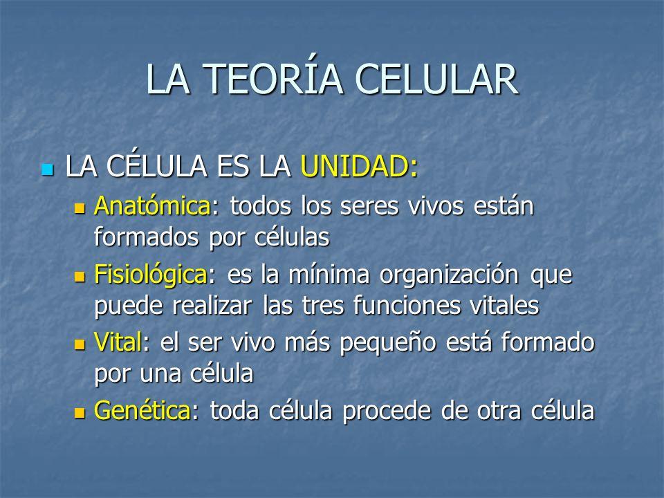 LA TEORÍA CELULAR LA CÉLULA ES LA UNIDAD: Anatómica: todos los seres vivos están formados por células Fisiológica: es la mínima organización que puede