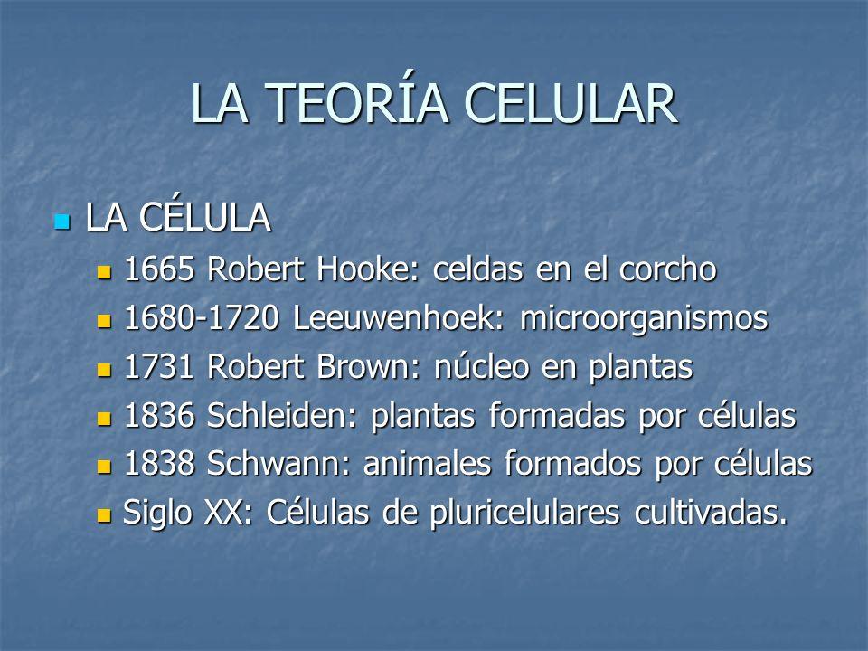 LA CÉLULA 1665 Robert Hooke: celdas en el corcho 1680-1720 Leeuwenhoek: microorganismos 1731 Robert Brown: núcleo en plantas 1836 Schleiden: plantas f