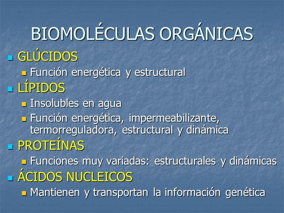 BIOMOLÉCULAS ORGÁNICAS GLÚCIDOS GLÚCIDOS Función energética y estructural Función energética y estructural LÍPIDOS LÍPIDOS Insolubles en agua Insolubl