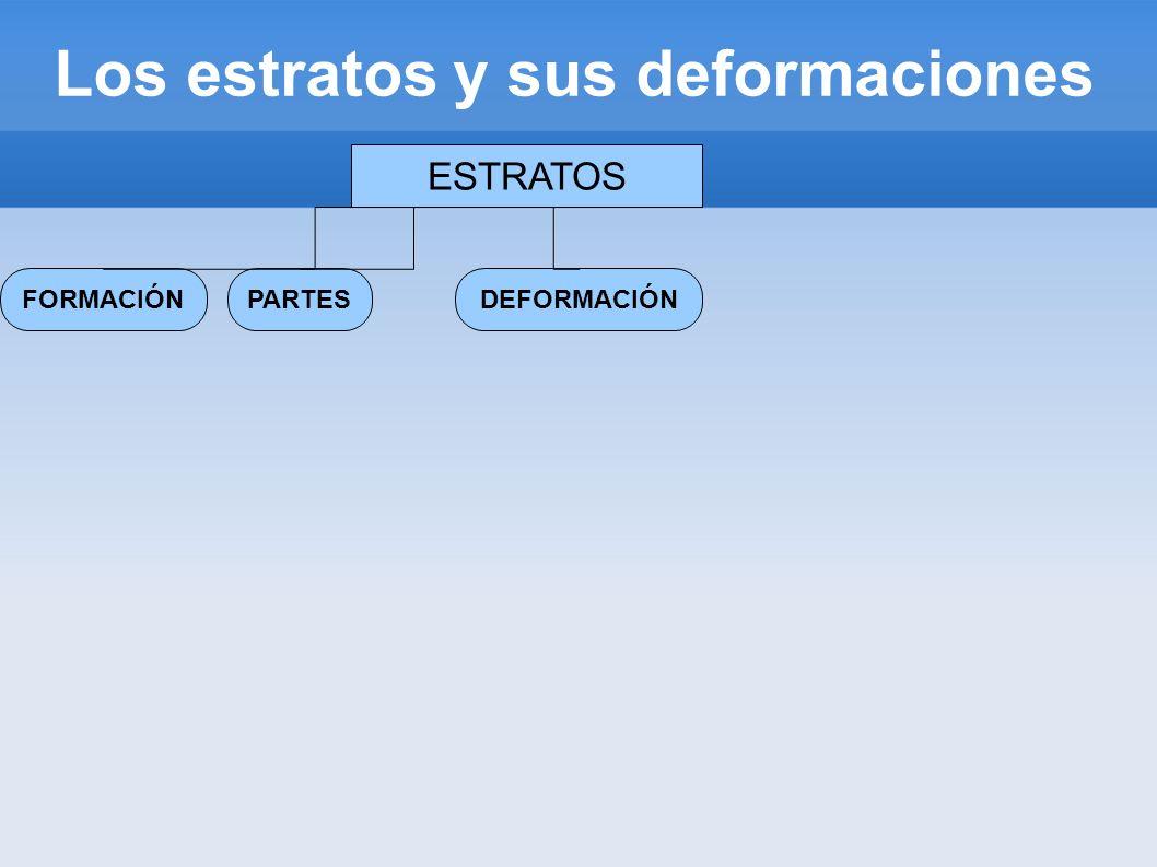 Los estratos y sus deformaciones ESTRATOS FORMACIÓNDEFORMACIÓNPARTES Compactación Cementación