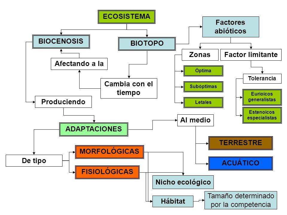 ECOSISTEMA BIOTOPO BIOCENOSIS Cambia con el tiempo Afectando a la Produciendo ADAPTACIONES MORFOLÓGICAS FISIOLÓGICAS TERRESTRE ACUÁTICO Al medio De ti