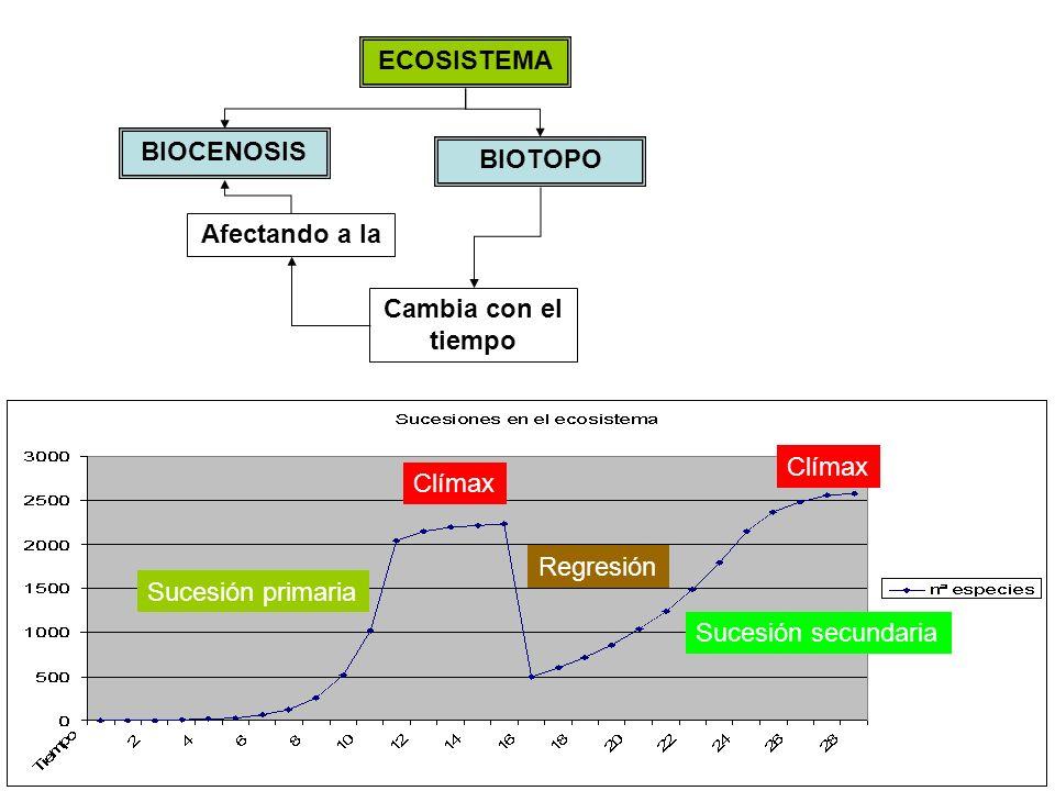 ECOSISTEMA BIOTOPO BIOCENOSIS Cambia con el tiempo Afectando a la Sucesión primaria Clímax Regresión Sucesión secundaria Clímax