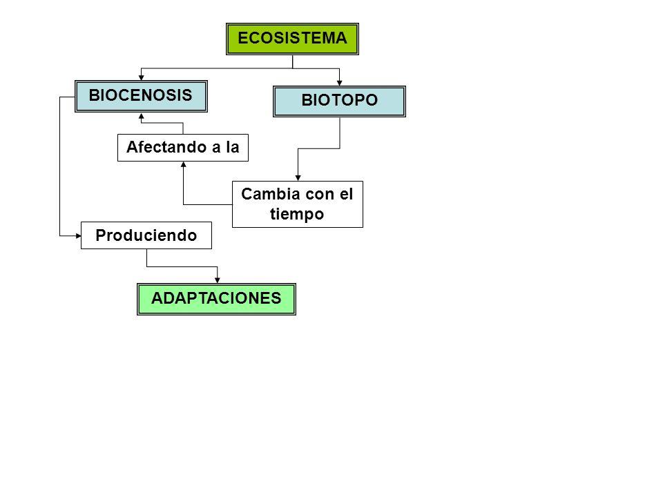ECOSISTEMA BIOTOPO BIOCENOSIS Cambia con el tiempo Afectando a la Produciendo ADAPTACIONES MORFOLÓGICAS FISIOLÓGICAS De tipo Hábitat Nicho ecológico Tamaño determinado por la competencia