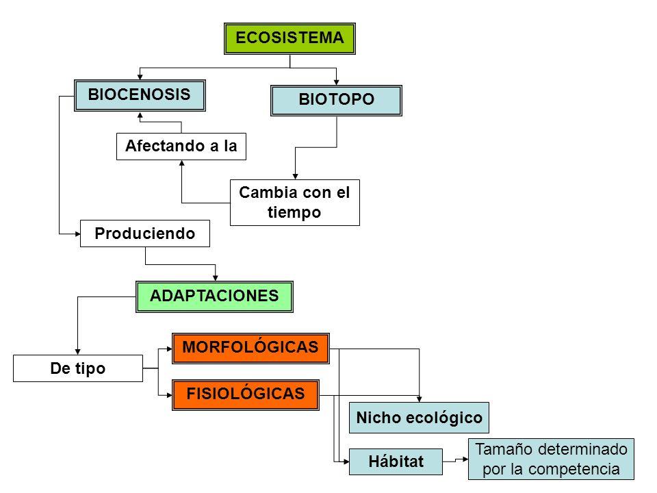 ECOSISTEMA BIOTOPO BIOCENOSIS Cambia con el tiempo Afectando a la Produciendo ADAPTACIONES MORFOLÓGICAS FISIOLÓGICAS TERRESTRE ACUÁTICO Al medio De tipo Hábitat Nicho ecológico Tamaño determinado por la competencia