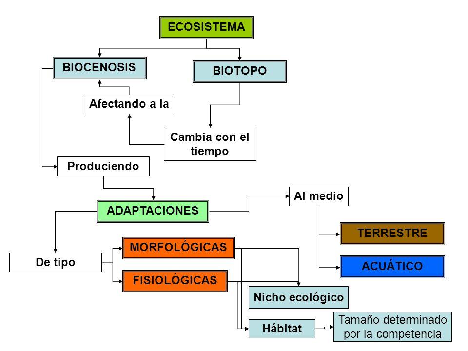 ECOSISTEMA BIOTOPO BIOCENOSIS Cambia con el tiempo Afectando a la Produciendo ADAPTACIONES MORFOLÓGICAS FISIOLÓGICAS TERRESTRE ACUÁTICO Al medio De tipo Hábitat Nicho ecológico Tamaño determinado por la competencia Factores abióticos