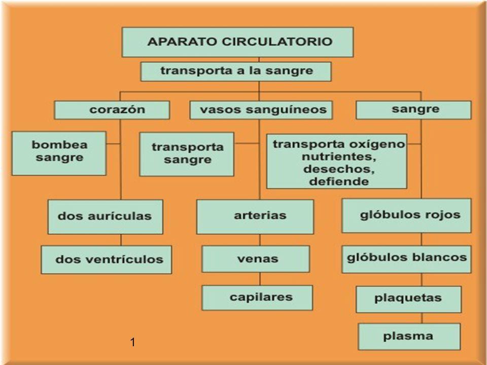 Enfermedades del sistema circulatorio 1) Explica como puede llegar a producirse un infarto de miocardio (8r) 2) Arritmias son: 3) Los soplos son: 4) L