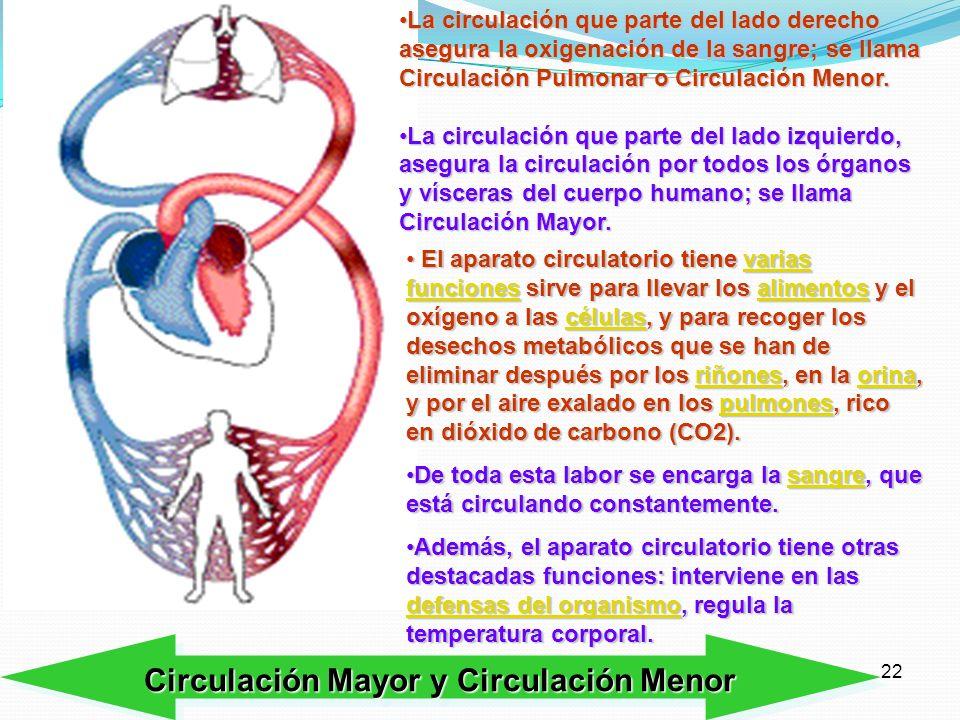21 Cavidades del corazón y venas y arterias más importantes A la aurícula derecha del corazón le llega sangre sucia desde el cuerpo, sangre con mucho