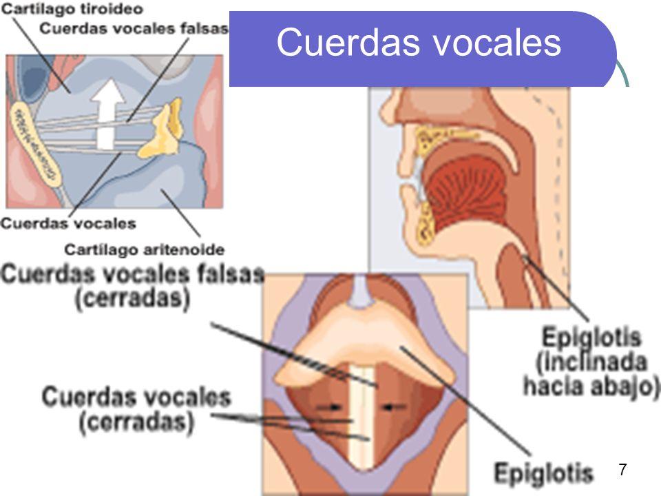 11 Cuerdas vocales 7