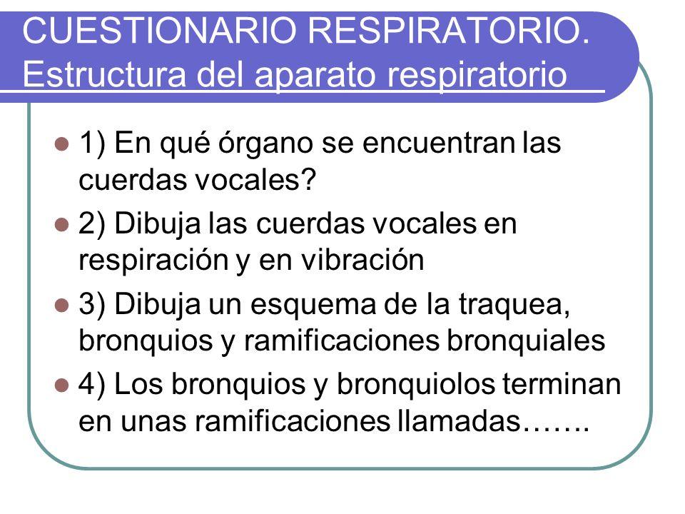 CUESTIONARIO RESPIRATORIO. Estructura del aparato respiratorio 1) En qué órgano se encuentran las cuerdas vocales? 2) Dibuja las cuerdas vocales en re