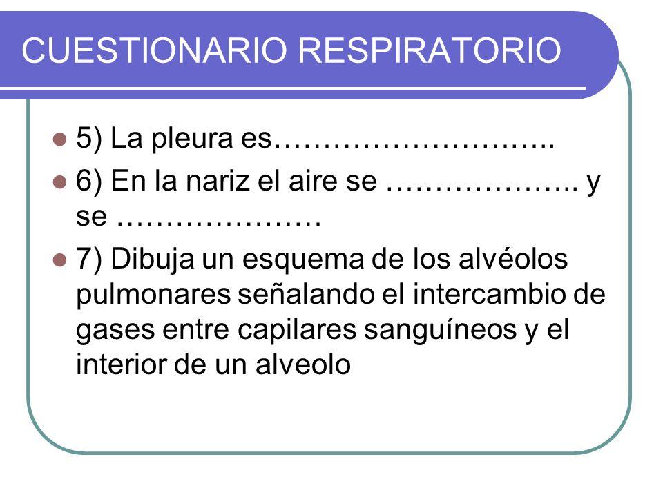 CUESTIONARIO RESPIRATORIO 5) La pleura es……………………….. 6) En la nariz el aire se ……………….. y se ………………… 7) Dibuja un esquema de los alvéolos pulmonares s