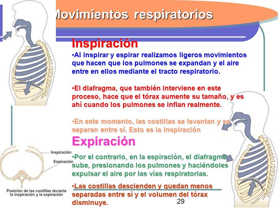 33 Movimientos respiratorios Inspiración Al inspirar y espirar realizamos ligeros movimientos que hacen que los pulmones se expandan y el aire entre e