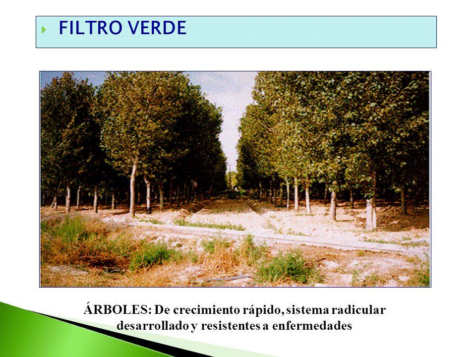 FILTRO VERDE ÁRBOLES: De crecimiento rápido, sistema radicular desarrollado y resistentes a enfermedades