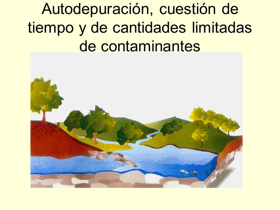 AUTODEPURACIÓN (2) Las algas aumentan su actividad fotosintética y por tanto el oxígeno del agua. Pero si a un río llegan grandes cantidades de aguas
