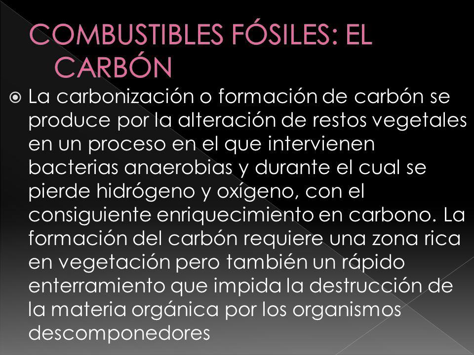 La carbonización o formación de carbón se produce por la alteración de restos vegetales en un proceso en el que intervienen bacterias anaerobias y dur
